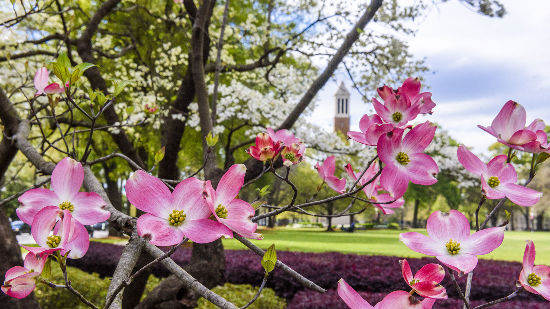 flowers in front of denny chimes